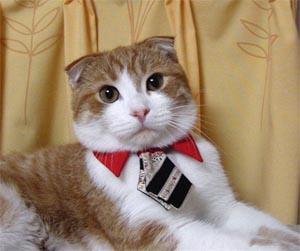 Cat Prin